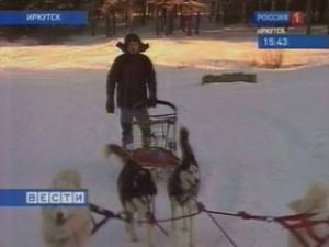 Собаки хаски приехали в Иркутск