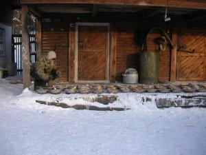 Питомник К9 в Иркутске