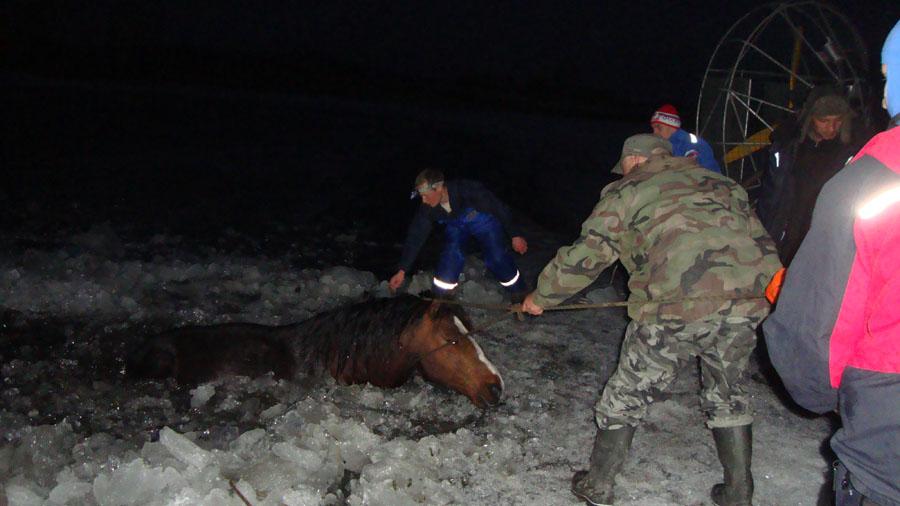 spas-horse1