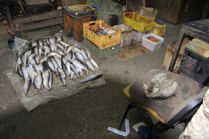 подпольный рыбный цех кошка