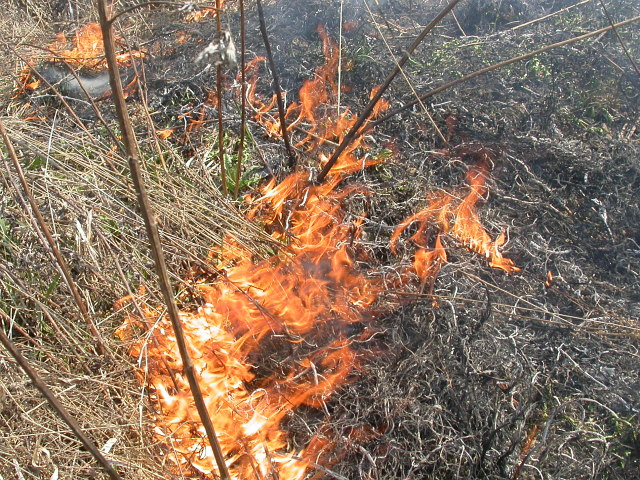 http://www.gazetairkutsk.ru/wp-content/uploads/2015/04/fire_trava.jpg
