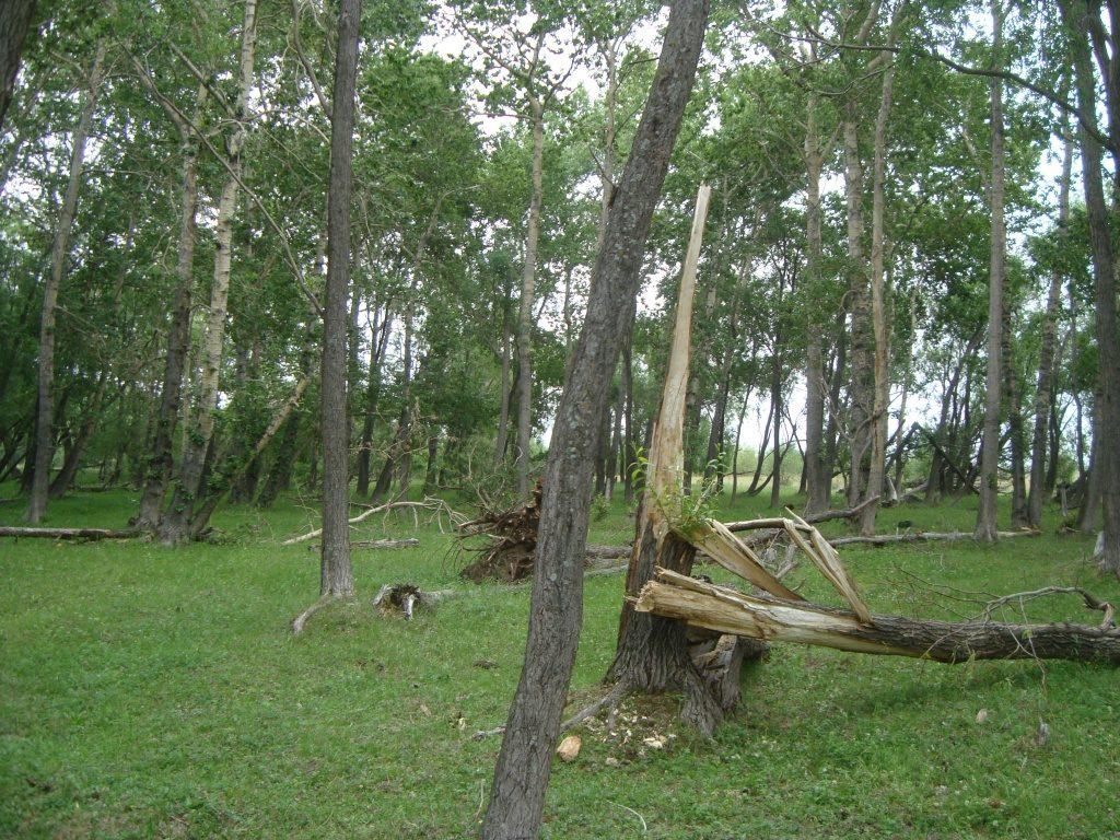 В Иркутской области жители могут свободно собирать валежник