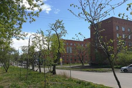 На центральных улицах Иркутска в августе начнут высаживать деревья