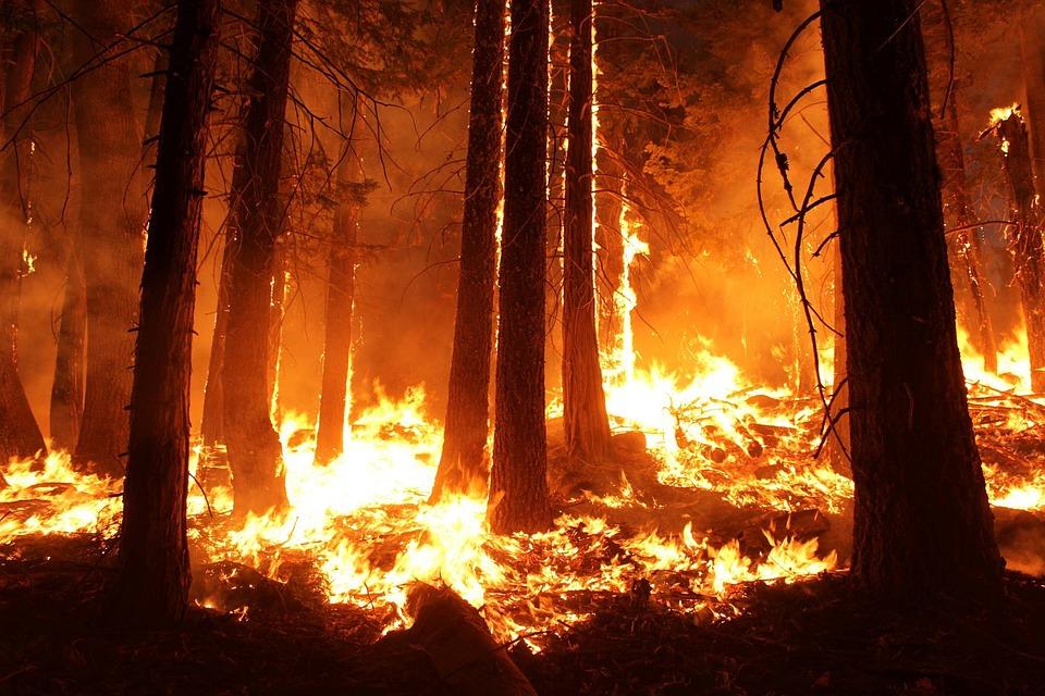 На 28 июня Иркутская область находится на втором месте среди российских регионов по площади лесных пожаров