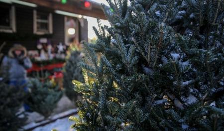 С 15 декабря в Иркутске начнут работу ёлочные базары