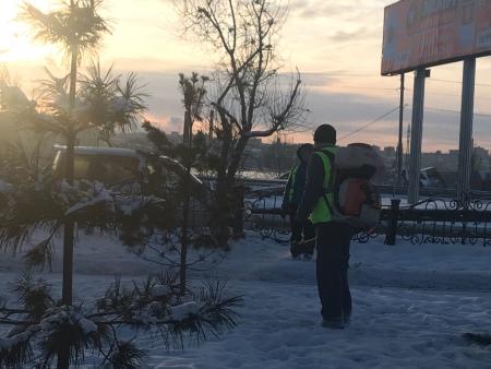 В Иркутске для предотвращения незаконной вырубки обрабатываются хвойные деревья