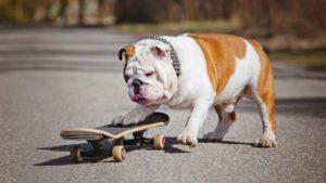 Тест: Насколько вы знаете все о собаках?