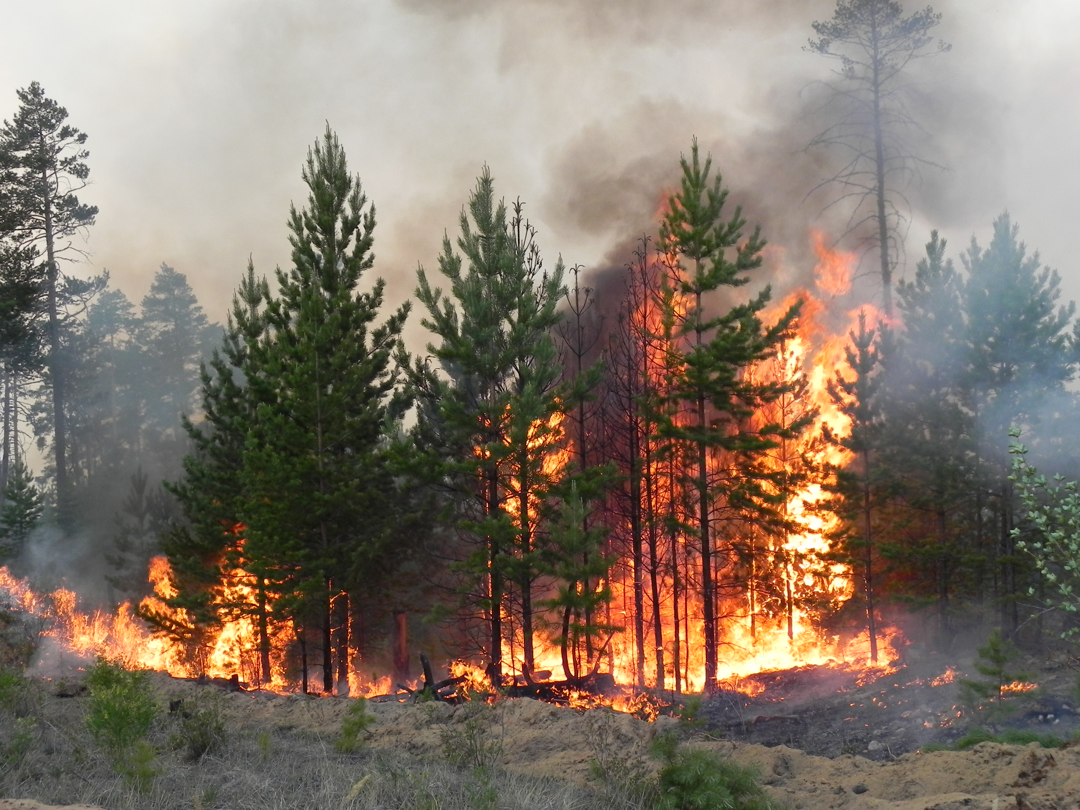В лесах Бурятии потушили три пожара