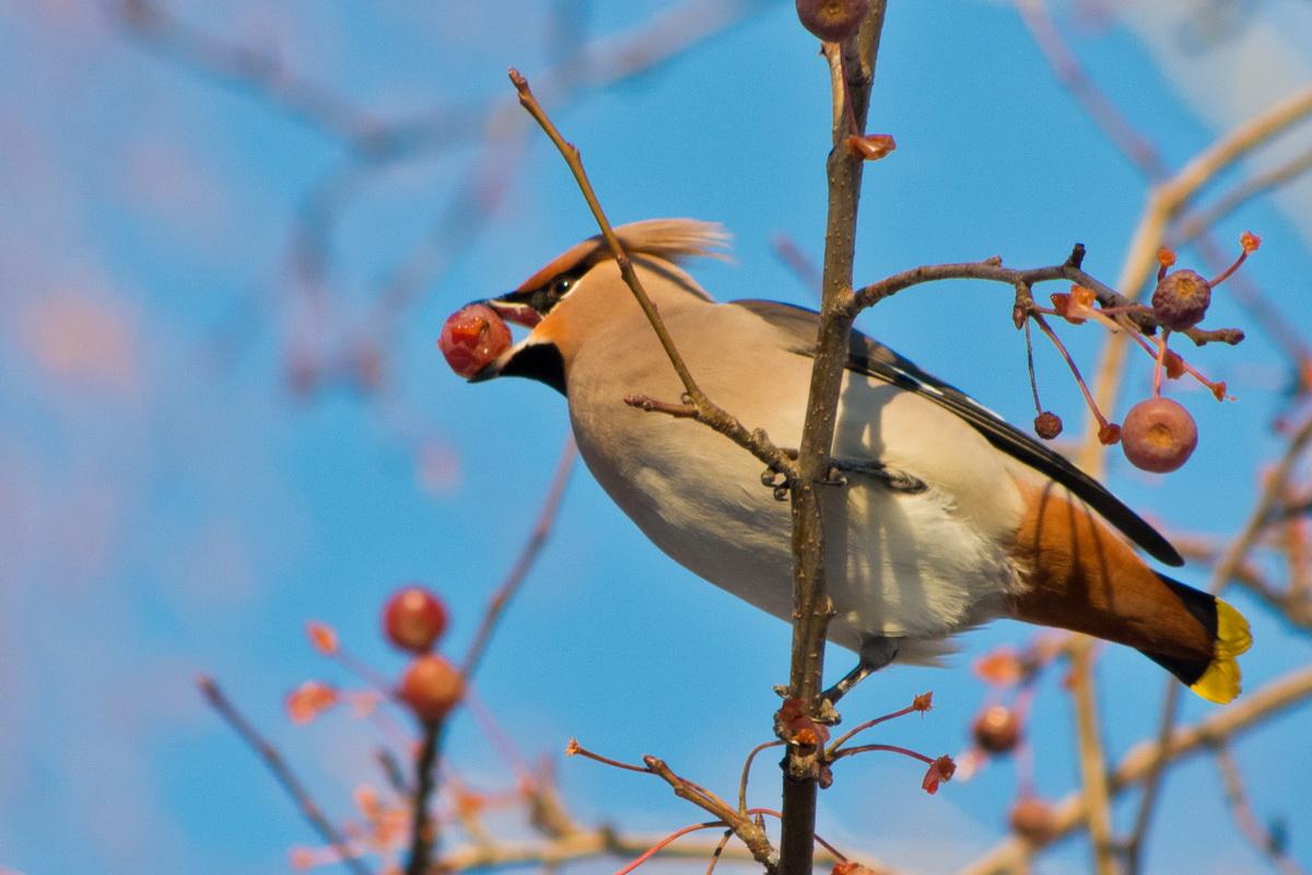 Как отпразднуют «День Птиц» в Иркутске