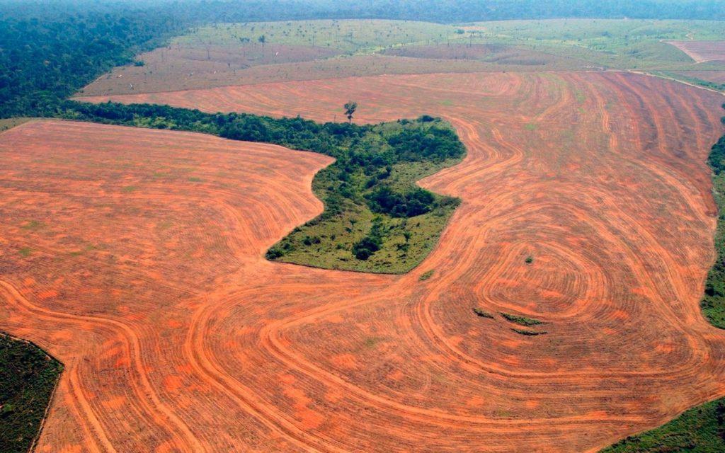 Артист Сергей Зверев о незаконной вырубке леса в Иркутской области