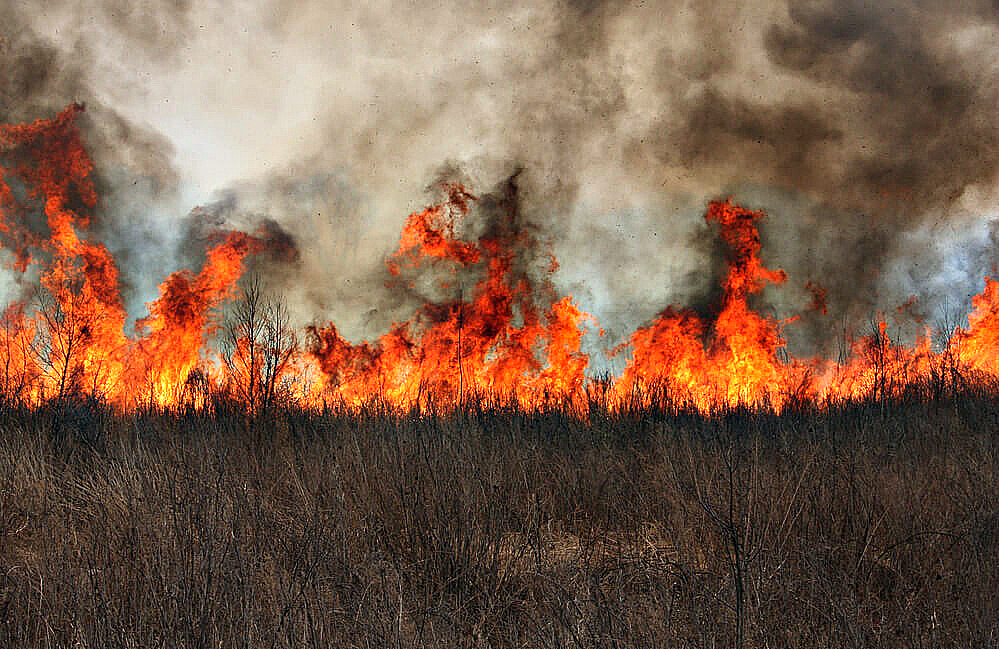 В лесах Приангарья установилась чрезвычайная опасность возникновения пожаров