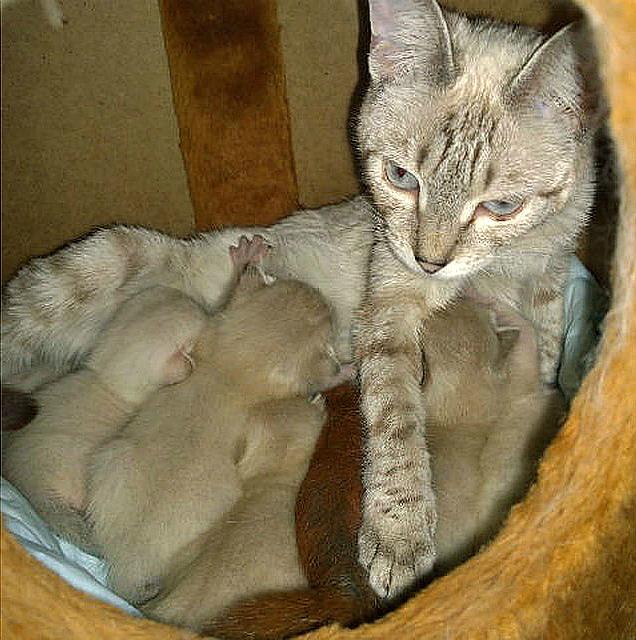Приняла, как родного: Кошка Даша выходила раненого бельчонка