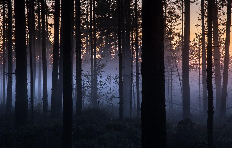 Мальчик из Приангарья заблудился и провел ночь в лесу, укрывшись ветками
