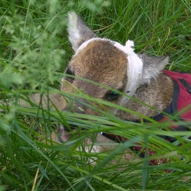 В Иркутской зоогалерее появился Дарт Вейдер: Упавший со скалы косуленок выжил