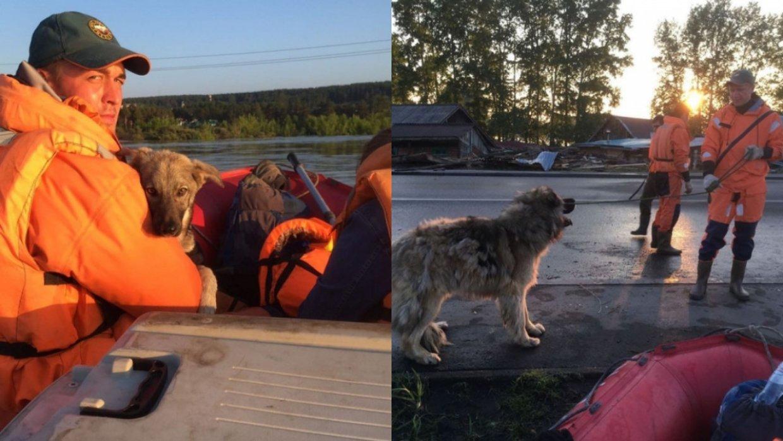 Наводнение в Тулуне: Последнюю партию спасенных животных привезли в иркутский питомник К-9