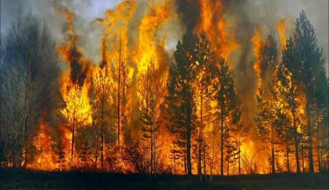 С. Сокол: «Ситуация с лесными пожарами в регионе — настоящая катастрофа»