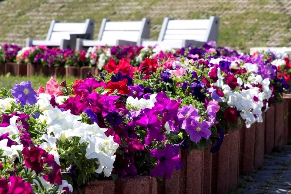 В Иркутске пройдет Первый международный фестиваль флористики