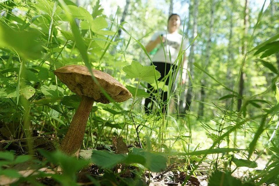 50 грибников потерялись в тайге Приангарья в этом году